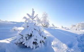 зима, сугробы, снег, деревья, пейзаж