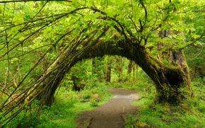 лес, тропинка, деревья, арка, природа