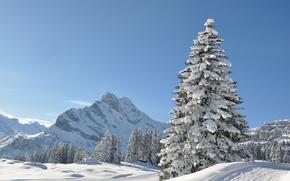 invierno, derivas, árboles, paisaje