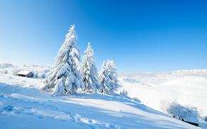 invierno, derivas, árboles, cabina, paisaje
