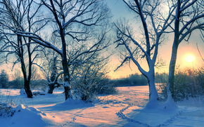 sunset, winter, trees, snow, traces, landscape