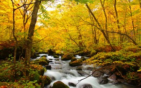 autumn, forest, trees, river, stones, nature