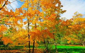 парк, поле, деревья, листья, пейзаж