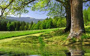 rzeka, pole, drzew, krajobraz