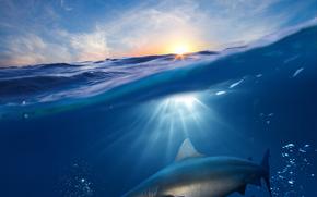 вода, море, волны, солнце, акула, рыбки, животные, подводный мир, рендеринг