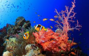海, 海底, 魚, 自然