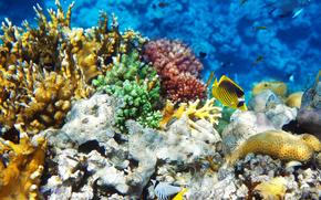 morze, dno morskie, ryba, charakter