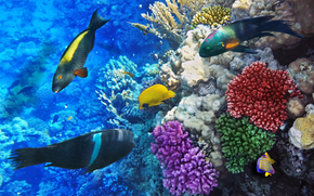 mare, fondali, pesce, natura