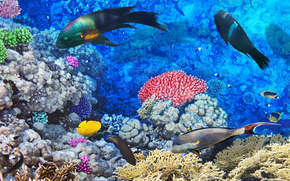 sea, seabed, fish, nature