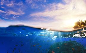 вода, море, волны, облака, небо, рыбки, подводный мир, животные