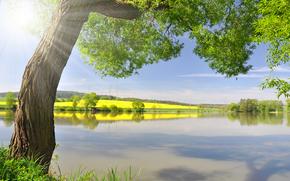 pond, alberi, paesaggio