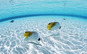 mar, oceano, água, peixe, Mundo Subaquático, foto