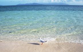 sea, ocean, water, waves, bird, seagull, shore