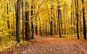 autumn, park, forest, trees, road, landscape, panorama
