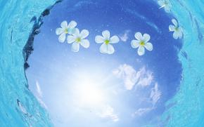 acqua, mare, oceano, natura, Fiori