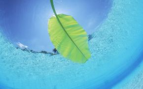 вода, море, океан, природа, листок