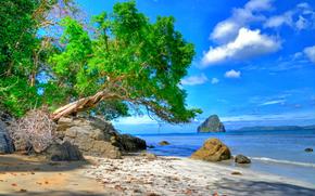 море, берег, скалы, дерево, пейзаж