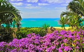 море, берег, цветы, пальмы, пейзаж