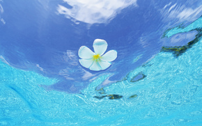 вода, море, океан, природа, цветы