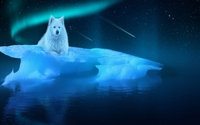 night, ice floe, white wolf