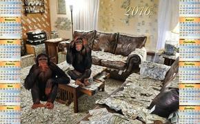 Calendario 2016, Calendario con le scimmie, Dollari, Bucks, soldi