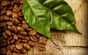coffee, Grain, foliage
