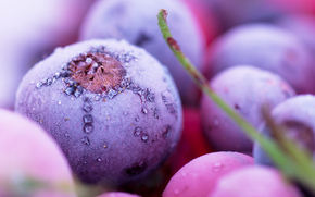 Macro View of Frozen Berries, frozen berries, frost