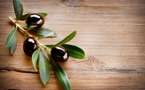 Olive, olive, ramo, fogliame