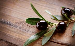 Olives, Oliven, Zweig, Laub