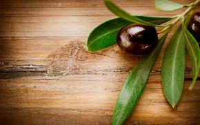 Olives, оливки, ветка, листья