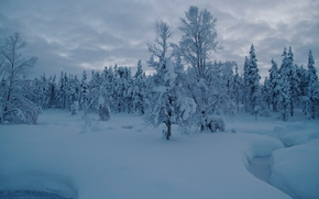 Saariselka, Laponie, Finlande, Saariselkä, Laponie, Finlande, hiver, neige, dérives, crique, forêt, arbres