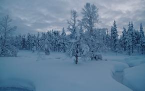 Saariselka, Lapland, Finland, Saariselkä, Lapland, Finland, winter, snow, drifts, creek, forest, trees