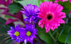 Flores, follaje, flora