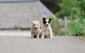собака, собаки, животные, щенок, щенки, друзья