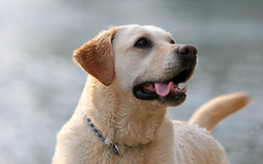 собака, собаки, животные, пёс