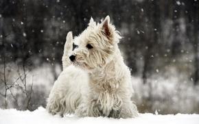 собака, собаки, пёс, животные, зима