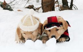 cane, Cane, animali, cucciolo, Cuccioli, inverno, gioco, amicizia, Beanie