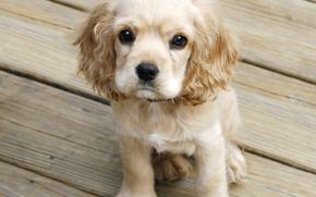 Hund, Dog, Tiere, Welpen, Puppies, Fußboden, Baum
