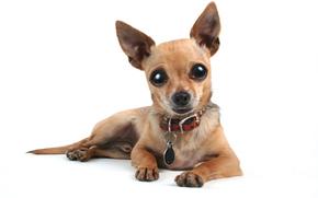 cane, Cane, animali, cucciolo, Cuccioli, occhi, visualizzare