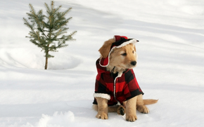 dog, Dog, animals, puppy, Puppies, suit, winter, snow