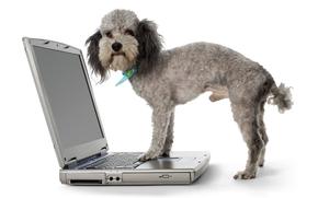 cane, Cane, pecorina, animali, notebook, utente, ragazzo, notevolmente