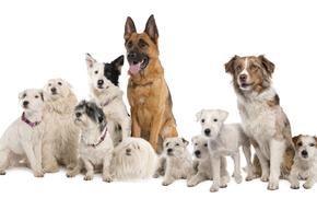 dog, Dog, animals, puppy, Puppies, company, get-together, drugany