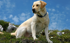 собака, собаки, животные, пёс, природа