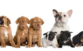 dog, Dog, animals, puppy, Puppies, drugany, company, get-together