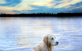 câine, Câine, animale, râu, natură