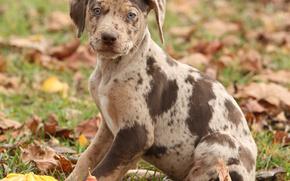 собака, собаки, животные, щенок, щенки, осень, тыквы
