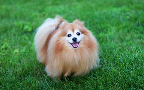собаки, собака, щенок, щенки, животные, трава
