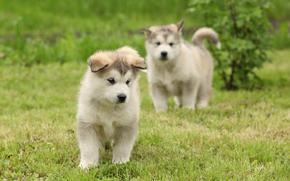 собаки, собака, щенок, щенки, животные, природа, друзья