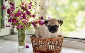 Cane, cane, cucciolo, Cuccioli, animali, Fiori, finestra