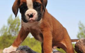 Cane, cane, animali, cucciolo, Cuccioli, log, Steep